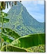 Jungle Within Canvas Print
