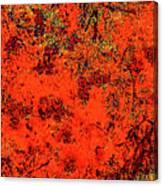 Juniper Berries 1 27 Canvas Print