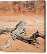 Juniper Log On Sand Canvas Print