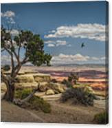 Juniper Tree On A Mesa Canvas Print