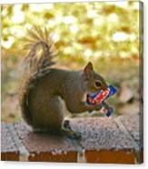 Junk Food Squirrel Canvas Print