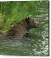Just A Swim Alaskan Grizzly Canvas Print