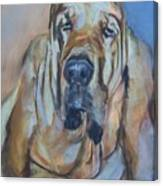 Just Another Magic Bloodhound Canvas Print