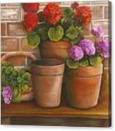 Just Geraniums Canvas Print