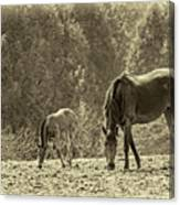 Just Like Mom - Sepia Canvas Print