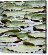 Just Lily Pads Canvas Print