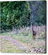 Just Off The Trail Canvas Print