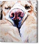 Just Snoozing Canvas Print