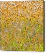 Just Wheat Canvas Print