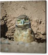 Juvenile Burrowing Owl-img_164817 Canvas Print