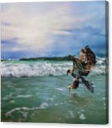 Juvenile Eagle At Sea Wildlife Art Canvas Print