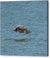 Juvenile Eagle Fishing Pickwick Lake Tennessee 031620161315 Canvas Print