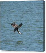 Juvenile Eagle Fishing Pickwick Lake Tennessee 031620161318 Canvas Print