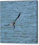 Juvenile Eagle Fishing Pickwick Lake Tennessee 031620161330 Canvas Print