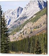 K-country And Bighorn Sheep Canvas Print