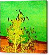 Kafka Summons His Birds To The Castle Canvas Print