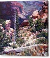 Kaibab Trail Canvas Print