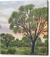 Kalahari Canvas Print