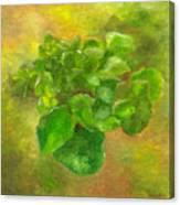 Kalanchoe Canvas Print