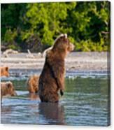 Kamchatka Brown Bear Canvas Print