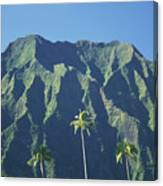 Kaneohe Palm Canvas Print