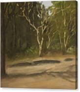 Kanha Forest Trail Canvas Print