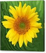 Kansas Sunflower Canvas Print