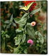 Kathy's Butterfly Canvas Print