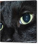 Katy - The Eyes Have It Canvas Print