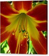 Katydid Surprise Canvas Print