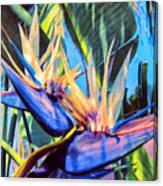 Kauai Bird Of Paradise Canvas Print