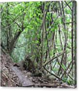 Kauai Forest Path For Secret Falls Canvas Print