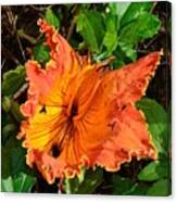 Kauai Hibiscus Canvas Print