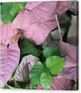 Kauai  Pinks Canvas Print