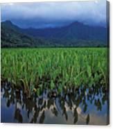Kauai Taro Field Canvas Print