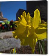 Kayak Launch Daffodil Cambridge Ma Canvas Print