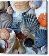 Kayla's Shells Canvas Print