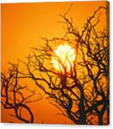 Keawe Tree At Sunset Canvas Print