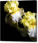 Keep Smiling Iris  Canvas Print
