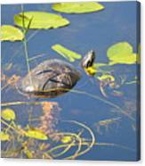 Keeping His Head Above Water Canvas Print