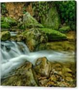 Kens Creek In Cranberry Wilderness Canvas Print