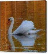 Kensingtons Swan 1  Canvas Print