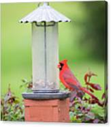 Kentucky Cardinal  Canvas Print
