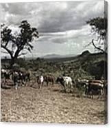 Kenya: Cattle, 1936 Canvas Print