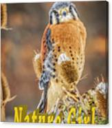 Kestrel Nature Wear Canvas Print