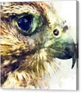 Kestrel Watercolor Painting Canvas Print