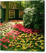 Keukenhof's Tulips Canvas Print