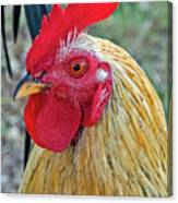 Key West Chicken Canvas Print