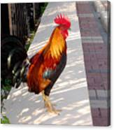Key West Rooster Canvas Print
