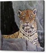 Khensu,  Jaguar Canvas Print